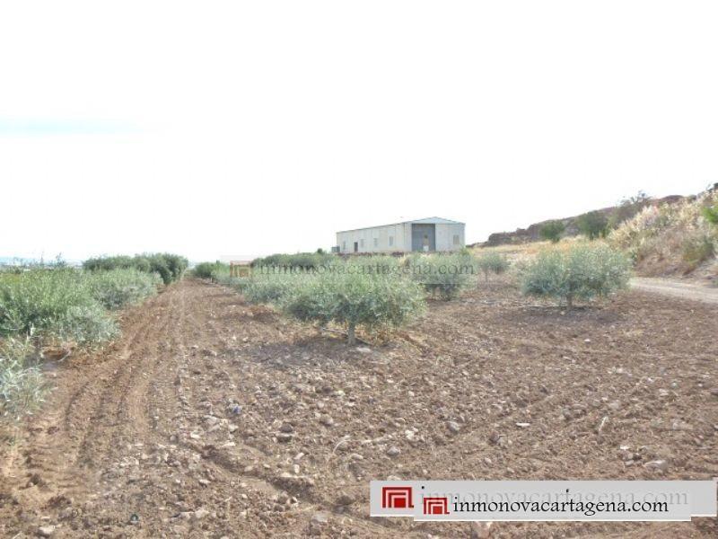 Venta de Terreno Rustico en LA ALJORRA