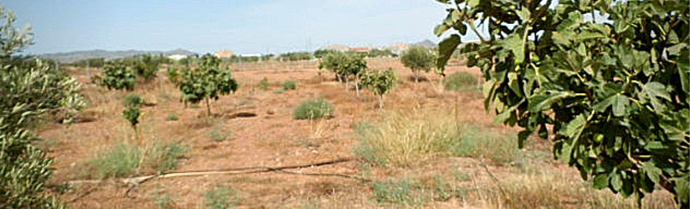 Venta de Terreno Rústico en el Palmero